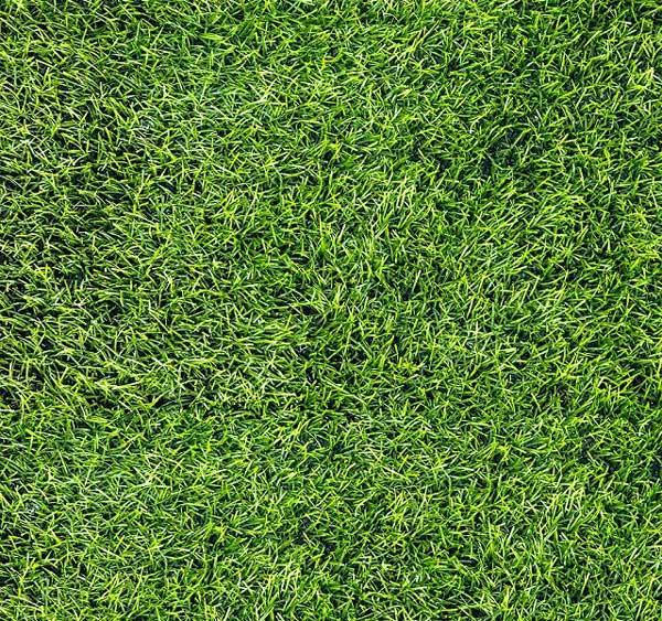 Top 5 mẫu gạch cỏ sân vườn giá rẻ, chất lượng được ưa chuộng